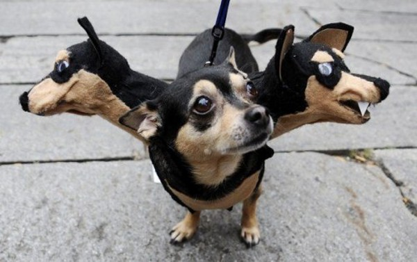[Image: 3-headed-dog.jpg]