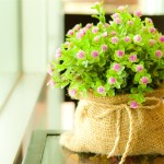 Pictures-Of-Flowers
