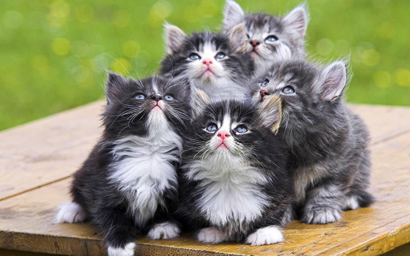 cat backgrounds