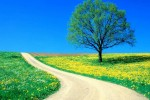 high_quality_spring_wallpaper