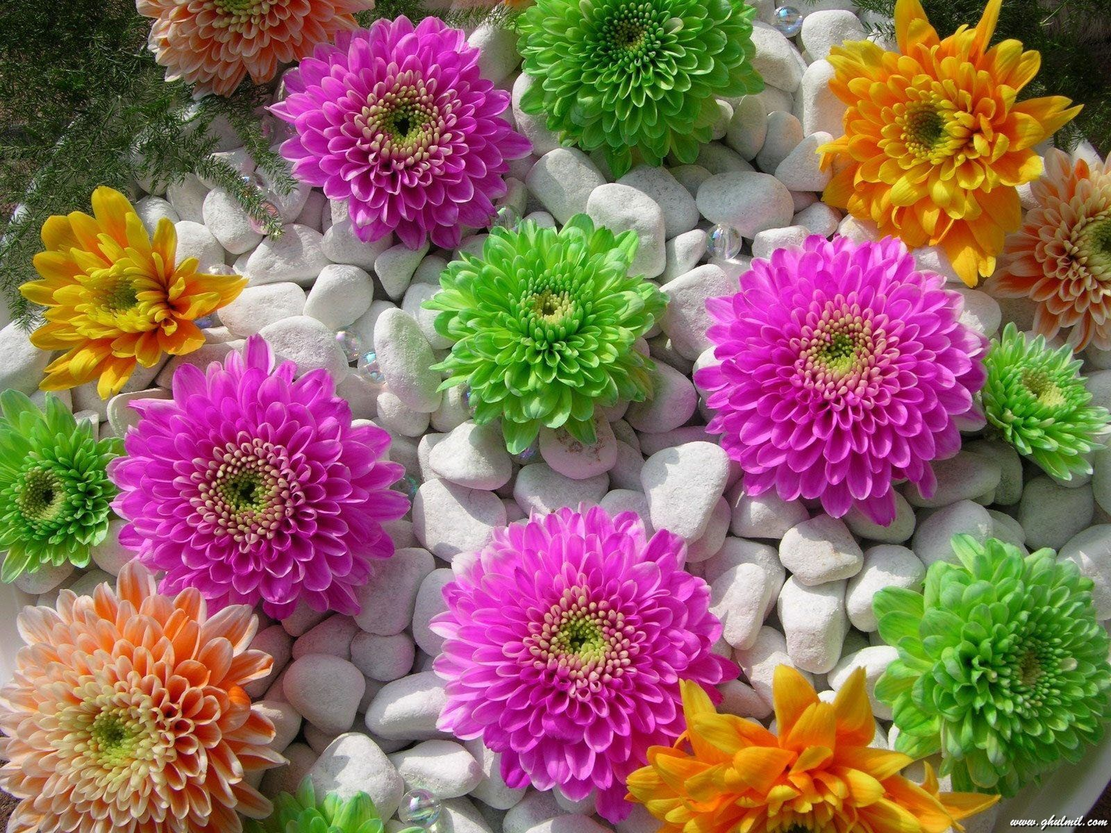 30 lovely wallpapers and pictures of flowers flower pictures dhlflorist Images