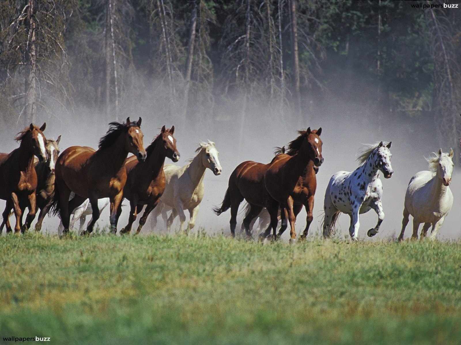 Horses_wallpapers