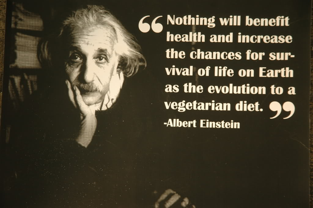 vegan quotes from famous people quotesgram