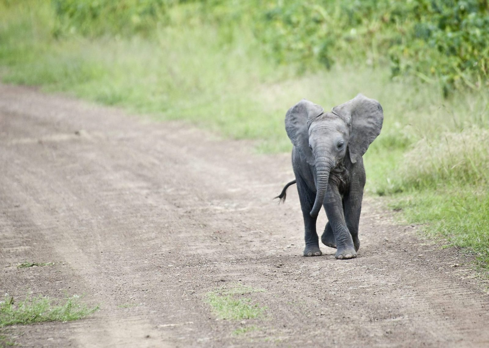 gallery for cute baby elephant wallpaper