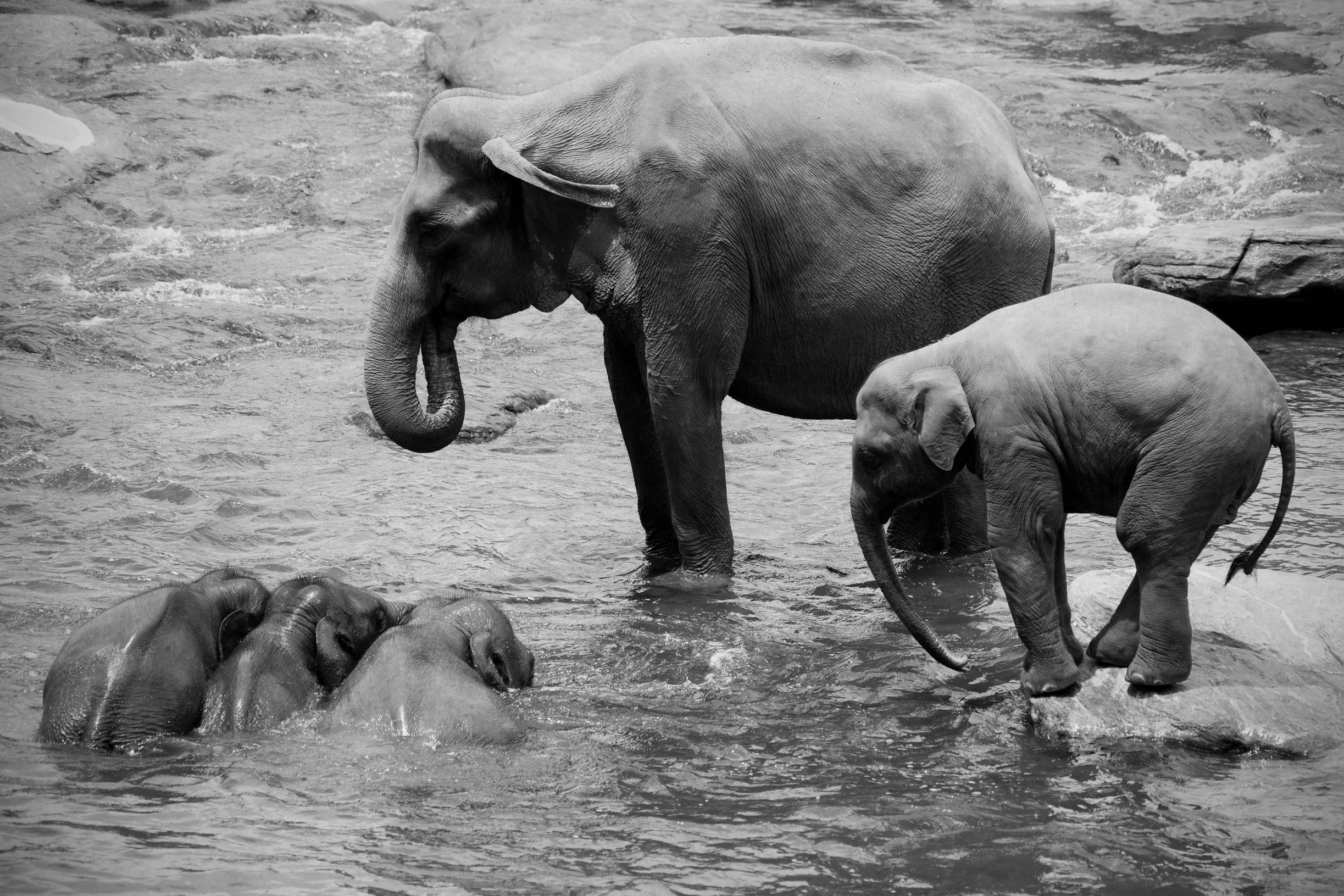 25 cute baby elephant pictures - Baby elephant wallpaper ...