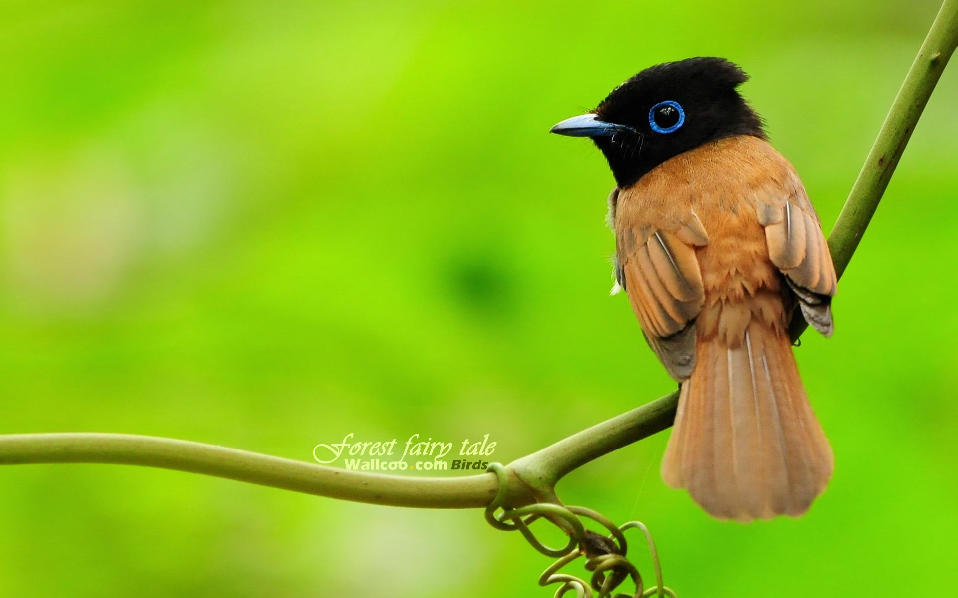 Birds Of paradise Images HD Wallpapers | Beautiful images HD ...