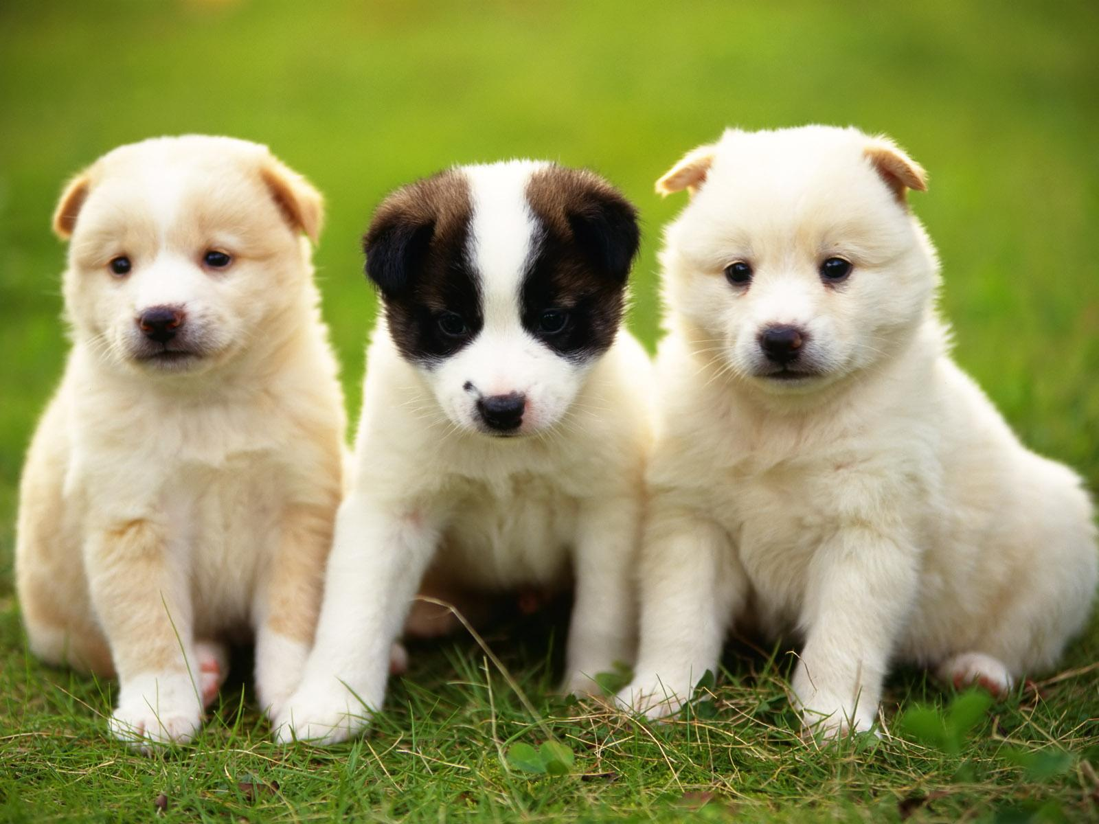 dogs pictures