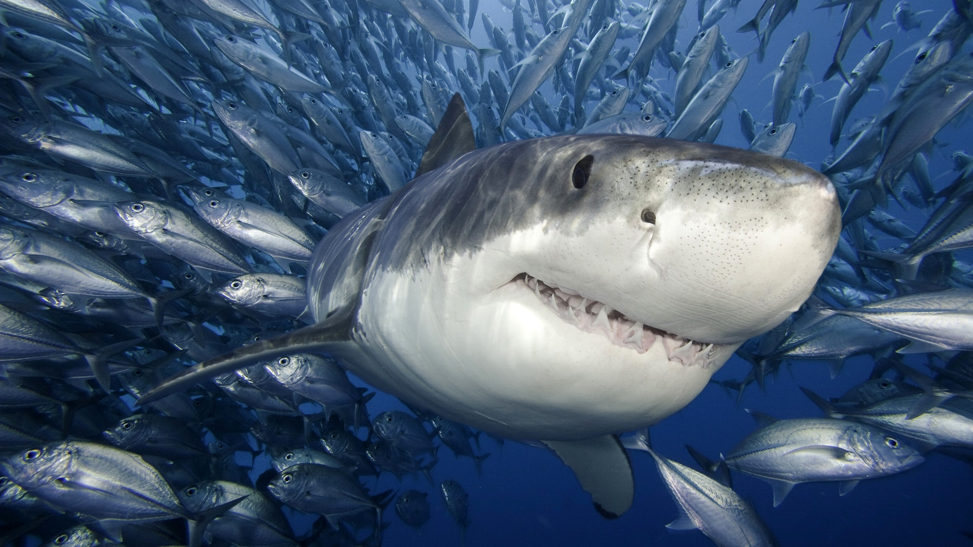 pictures of sharks
