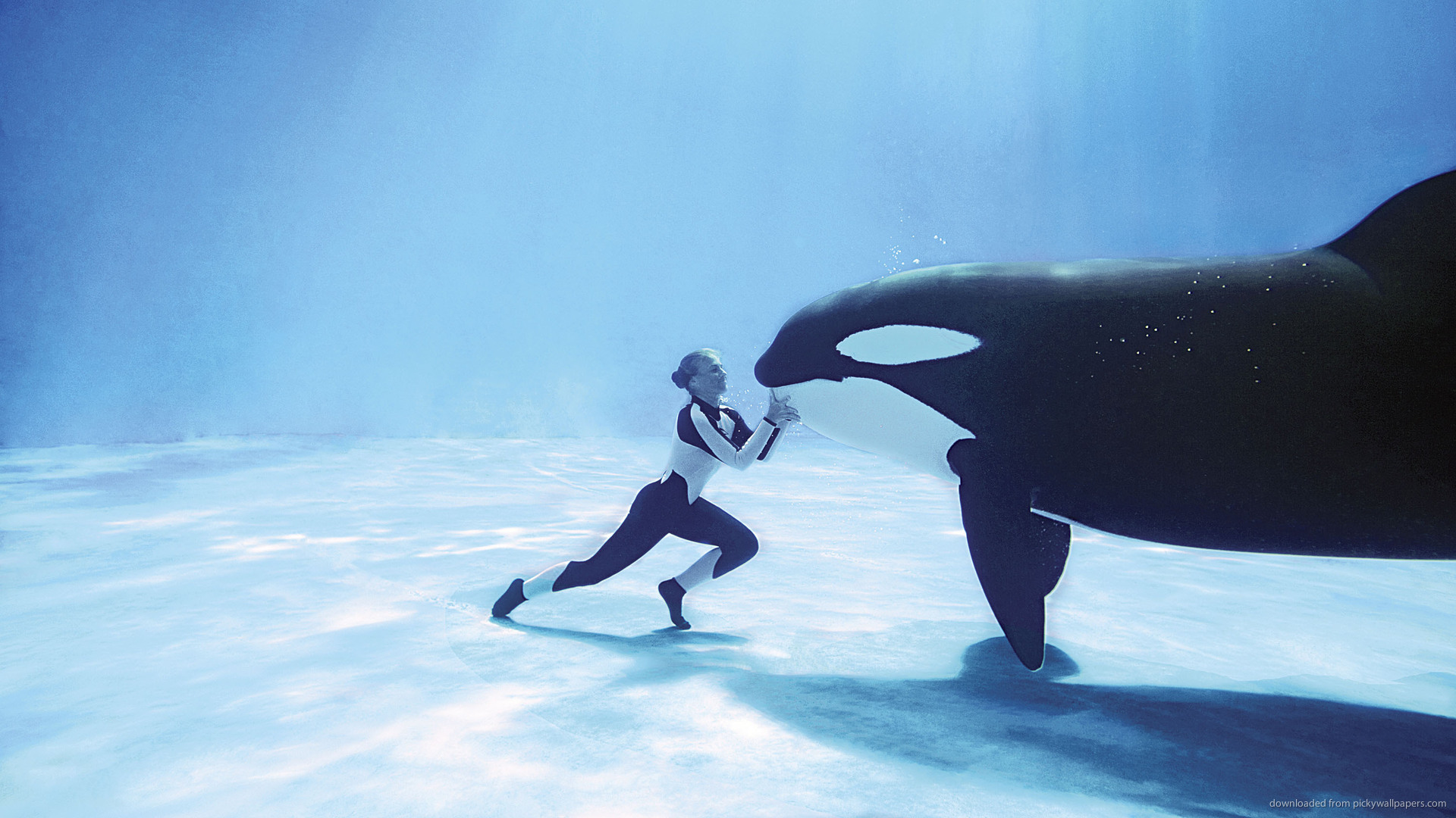25 mind blowing killer whale pictures