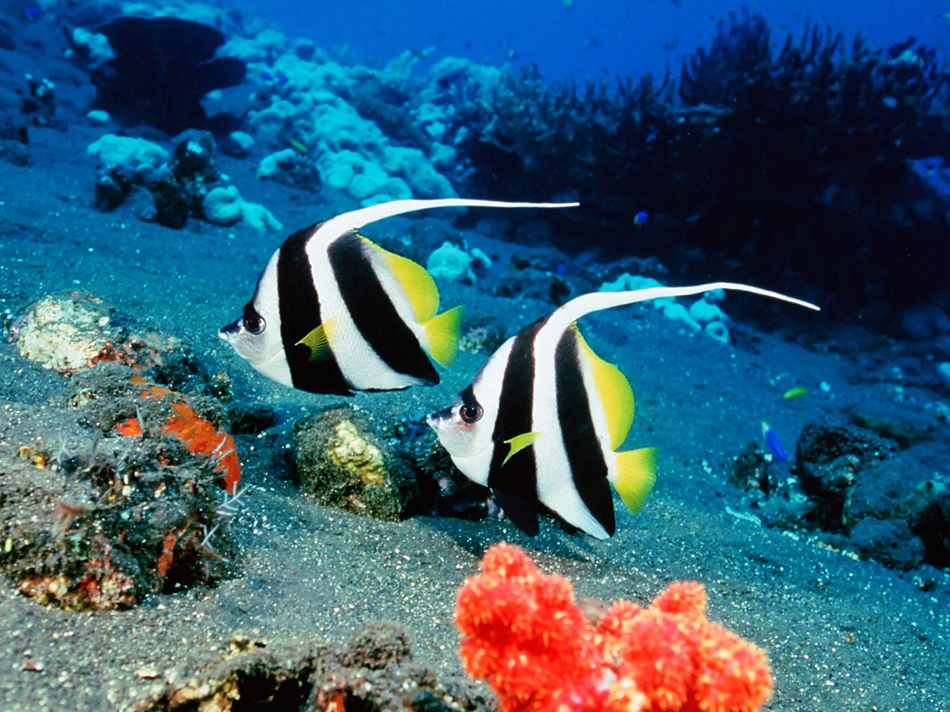 Tropical Saltwater Fish : saltwater fish