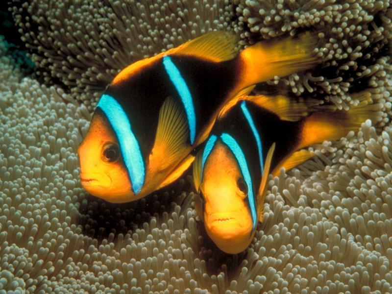 Beautiful Saltwater Fish Saltwater Fish Beautiful