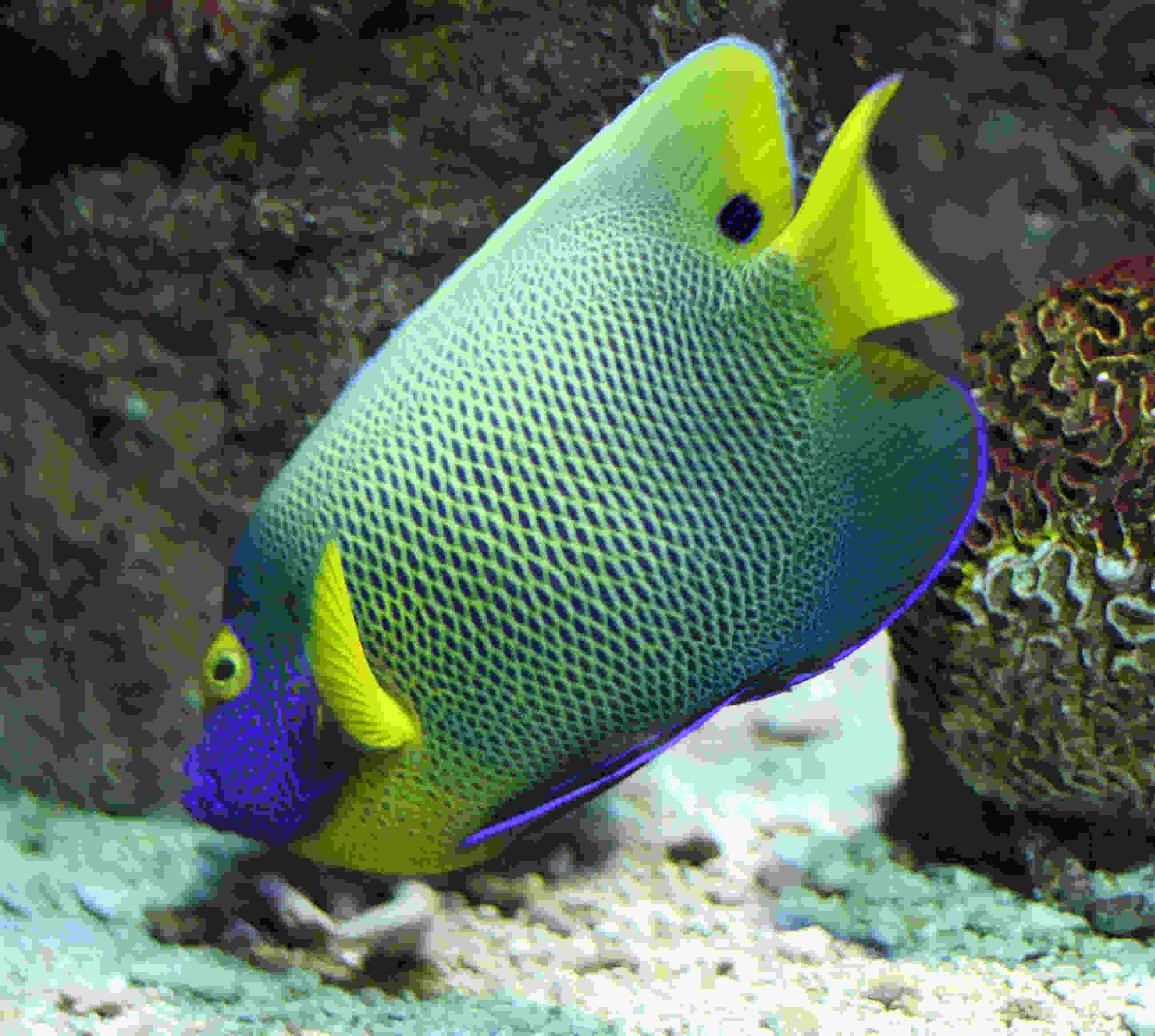 Marine Tropical Fish Tropical Fish