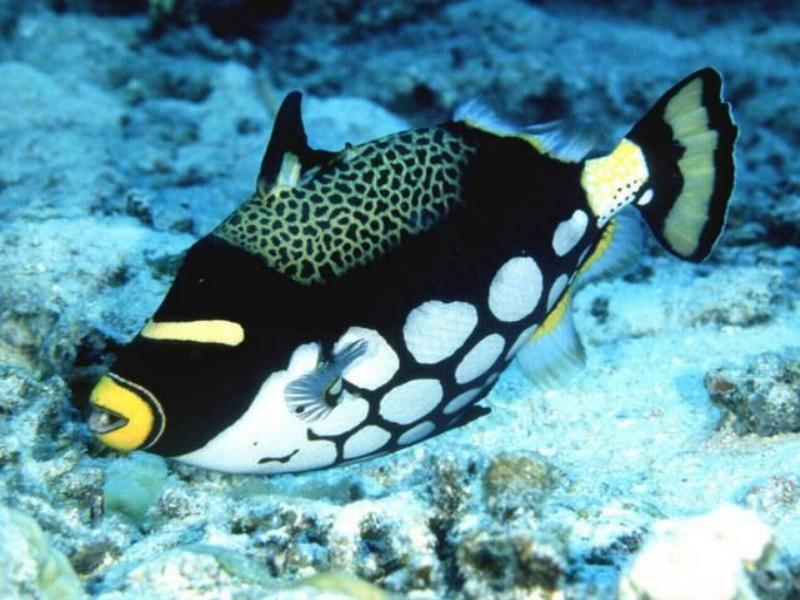 40 Beautiful Tropical Fish Pictures