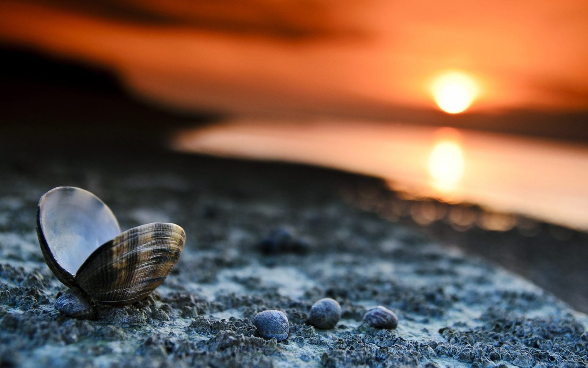 Beach Sunset Landscape Shells Wallpaper 2016