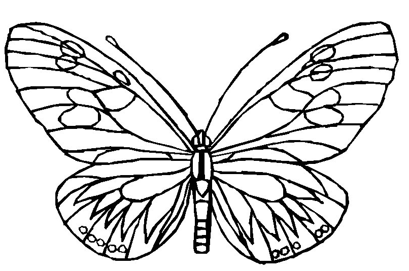 Butterfly Pages to Color for kids