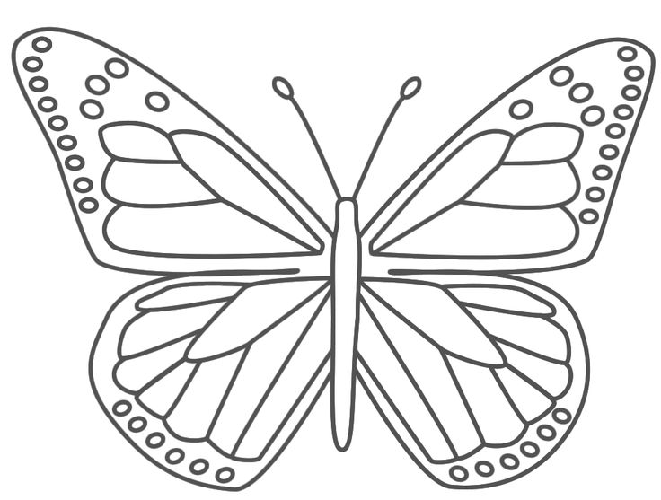 realistic butterflies coloring pages - photo#13