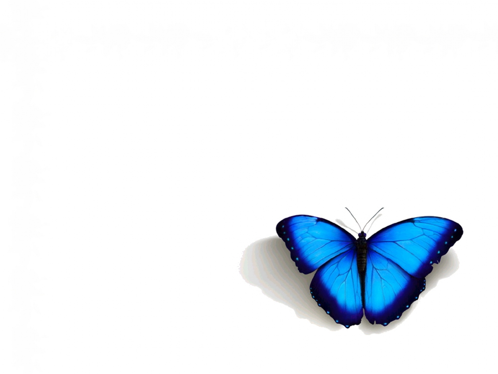 gorgeous butterfly wallpapers