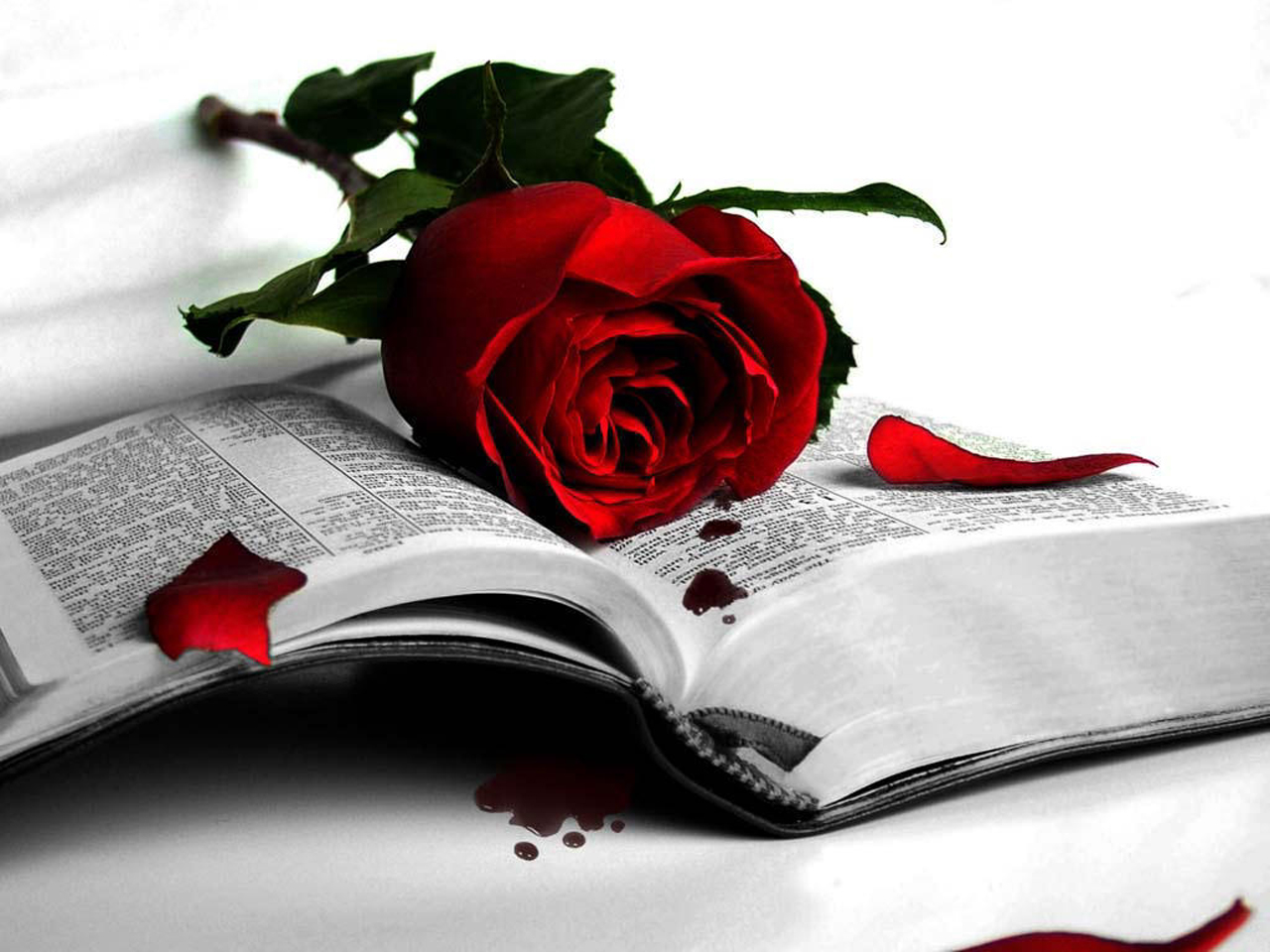 love book roses wallpaper