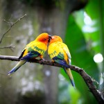 Beautiful-Lovely-Birds-Images