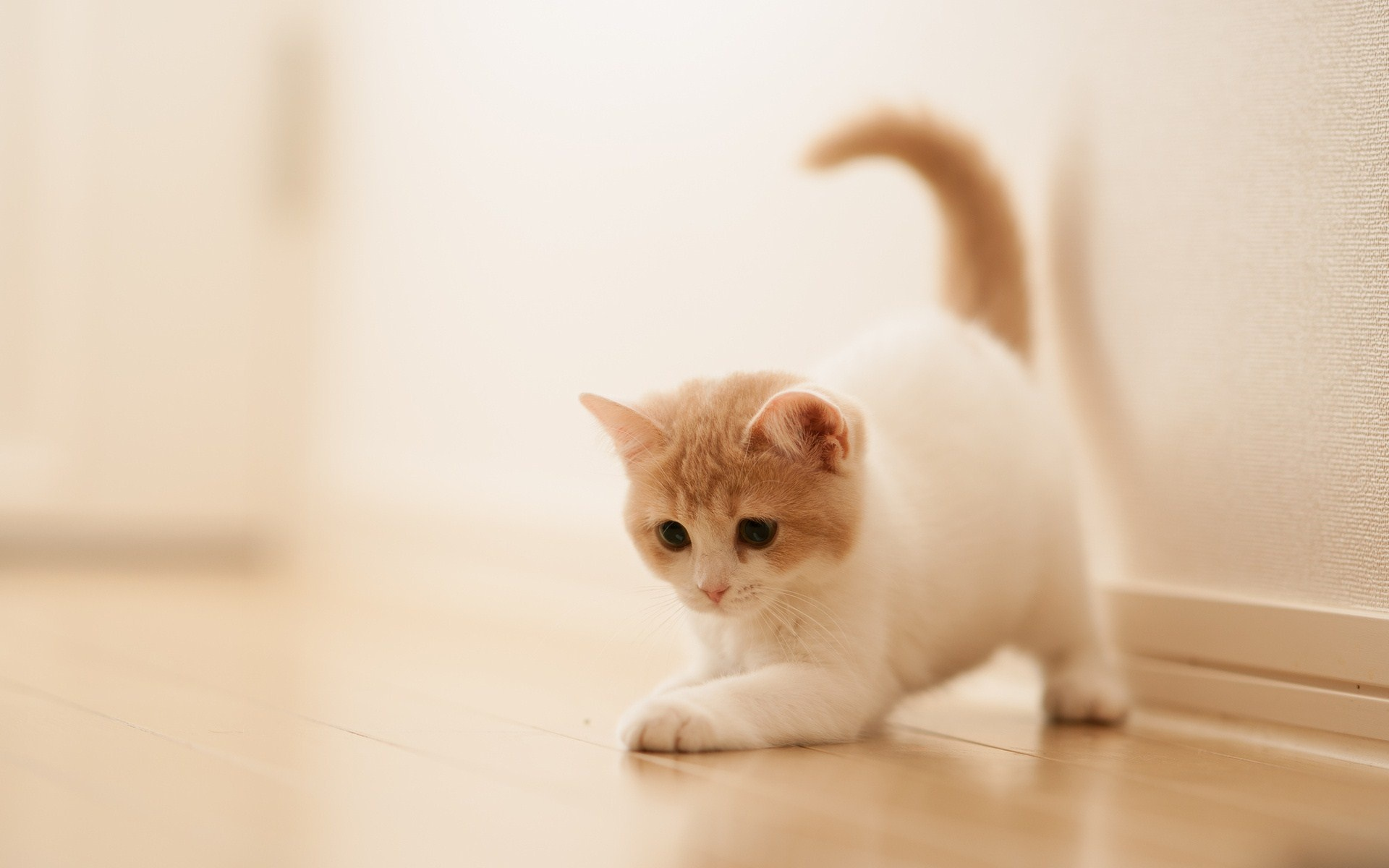 cute-white-kitty-girly-wallpapers