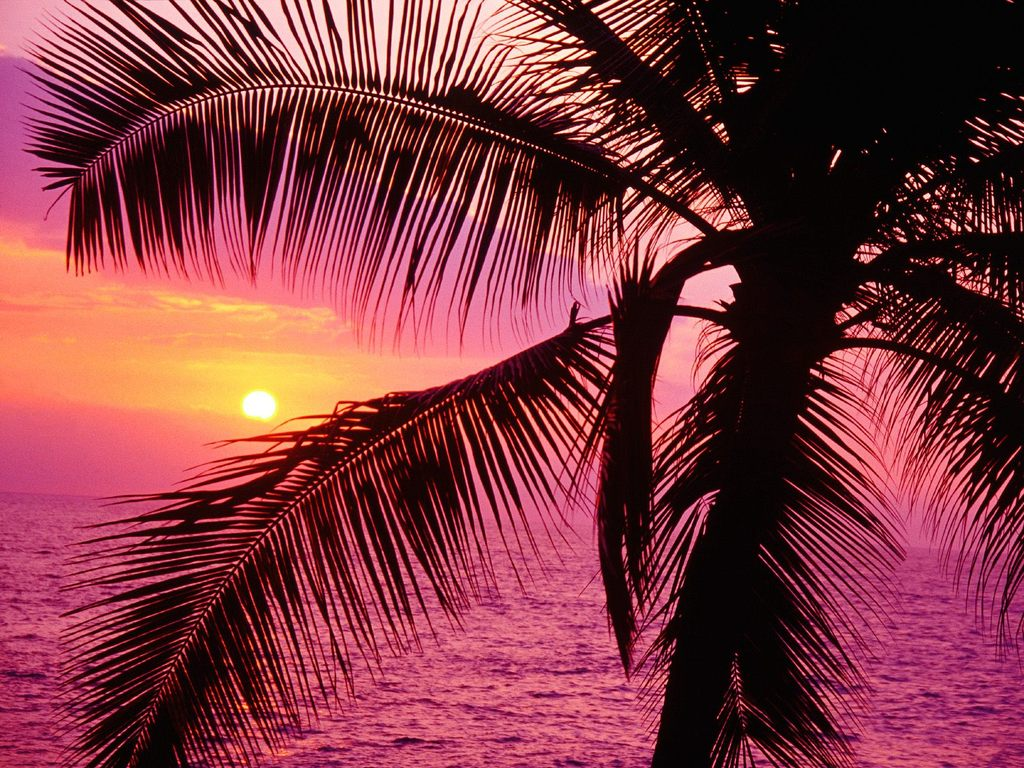 beach-sunset-palm-girly-hospital