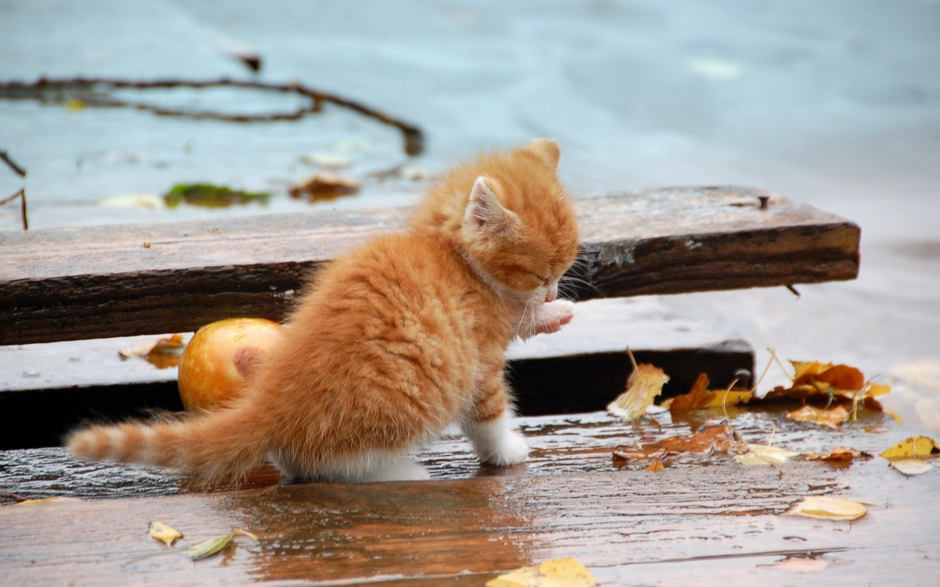 cute-cat-playing-in-rain-wallpapers