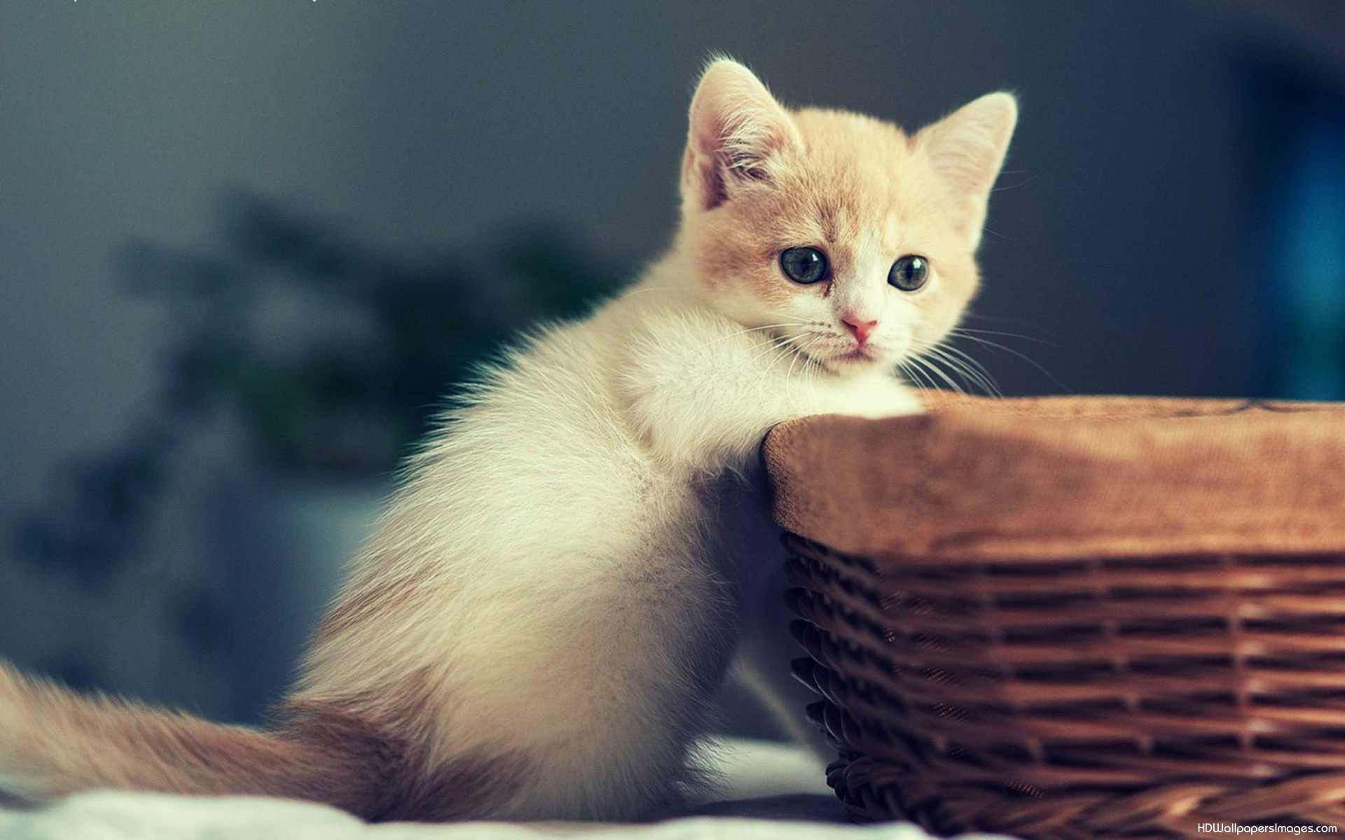 cute-kittens-wallpapers-for-girls