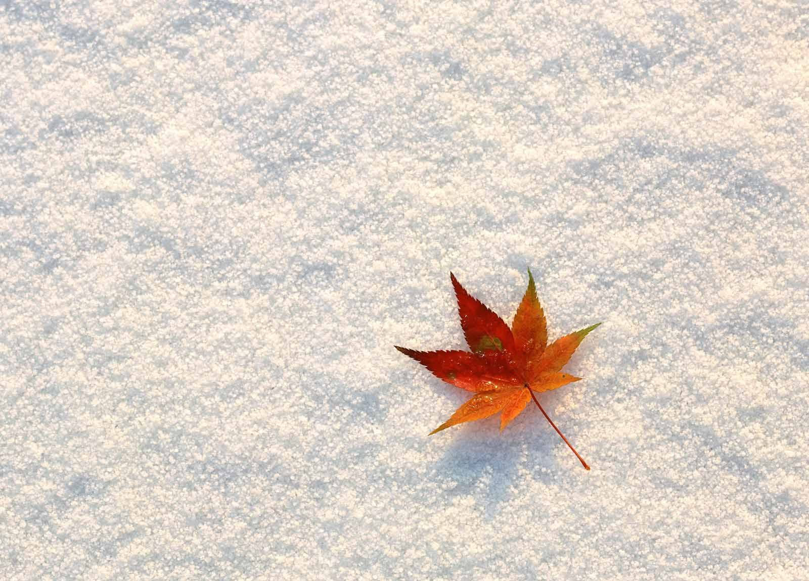 fall-snow-wallpapers