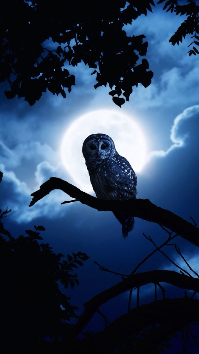 owl-night-full-moon-halloween-iphone-wallpaper