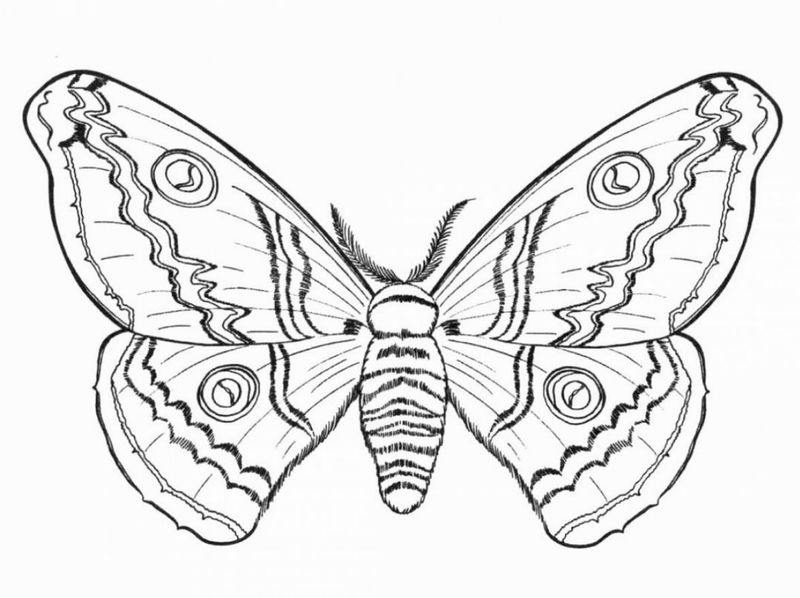 Beautiful Hard Butterfly Coloring Pages