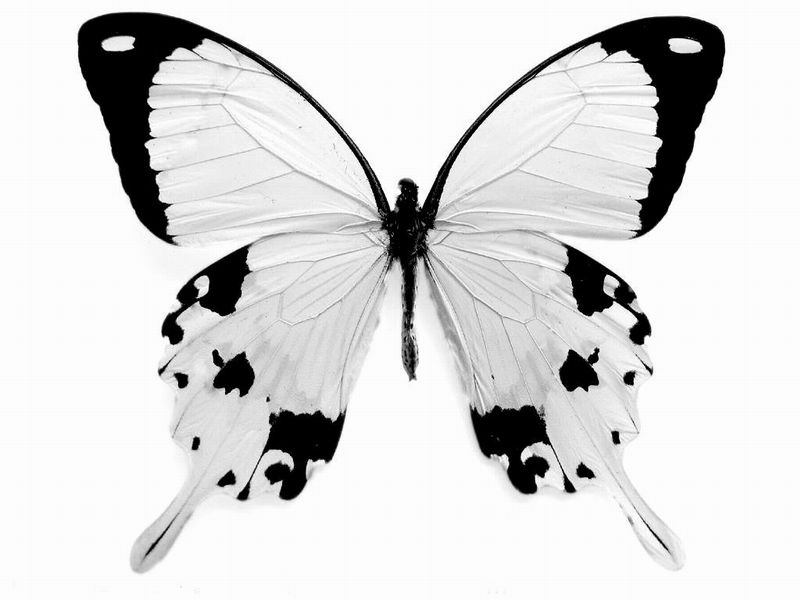 Best Butterfly Coloring Page