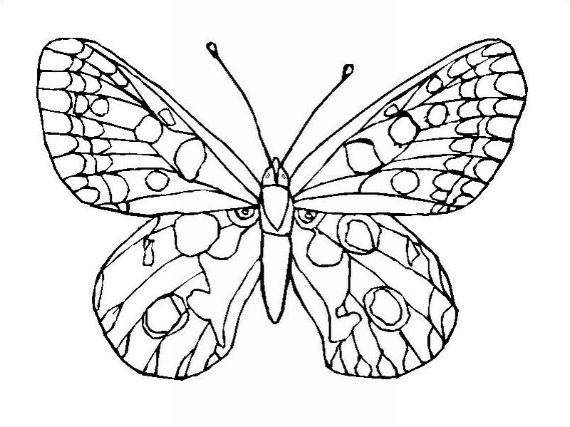 Butterfly Coloring Best Page