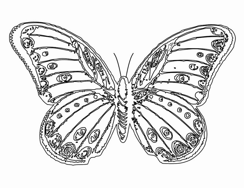 Butterfly Coloring Page Impressive