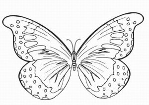 Butterfly Printable Coloring Page