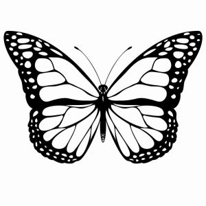 Butterfly Printable Coloring Pages