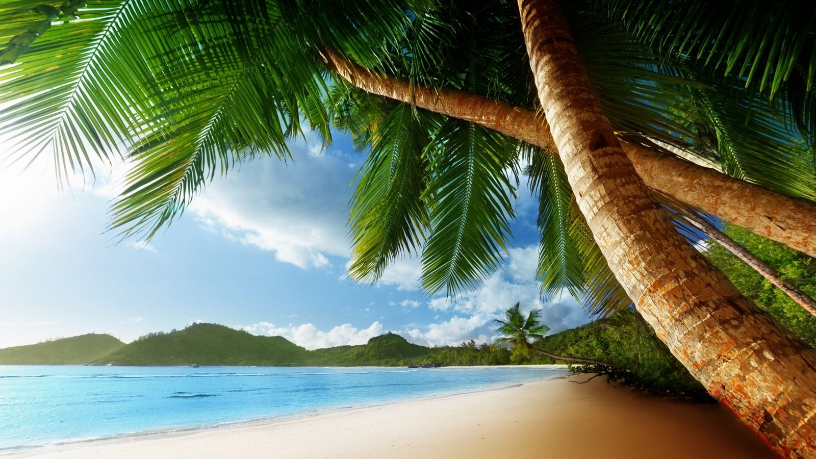 Chill Out Beach Palm Trees