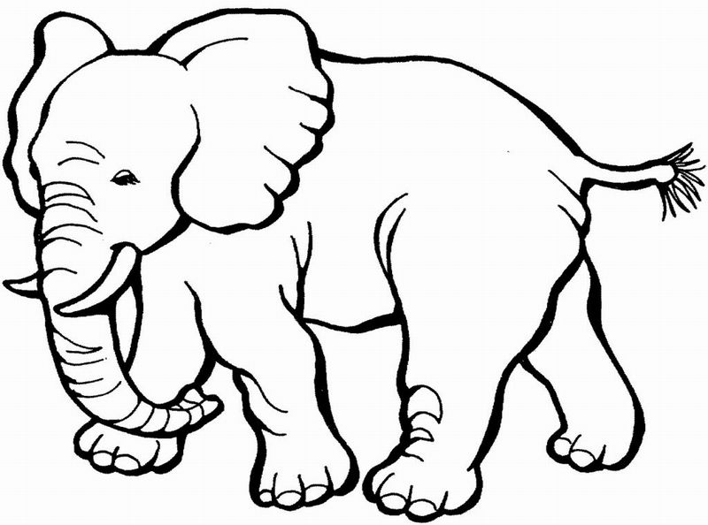 Coloring for kids coloring pages animals
