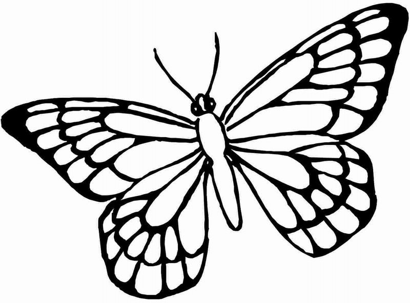 Cool Trendy Butterfly Coloring Page