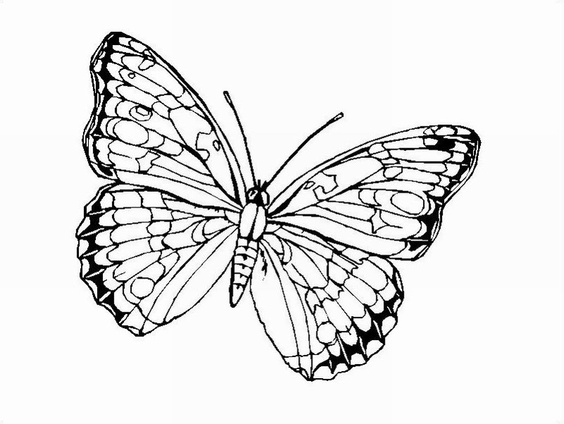 Printing Butterfly Coloring Window