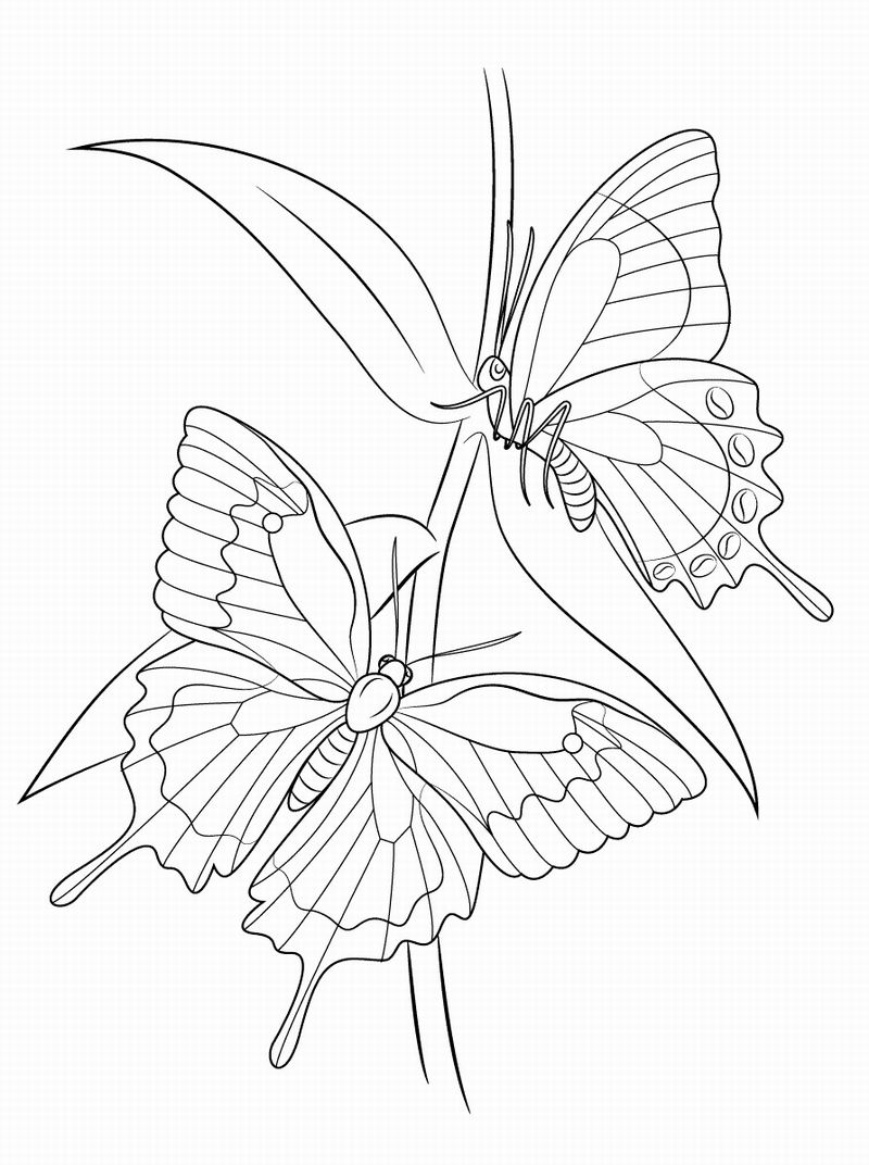 30 beautiful printable butterfly coloring pages for kids