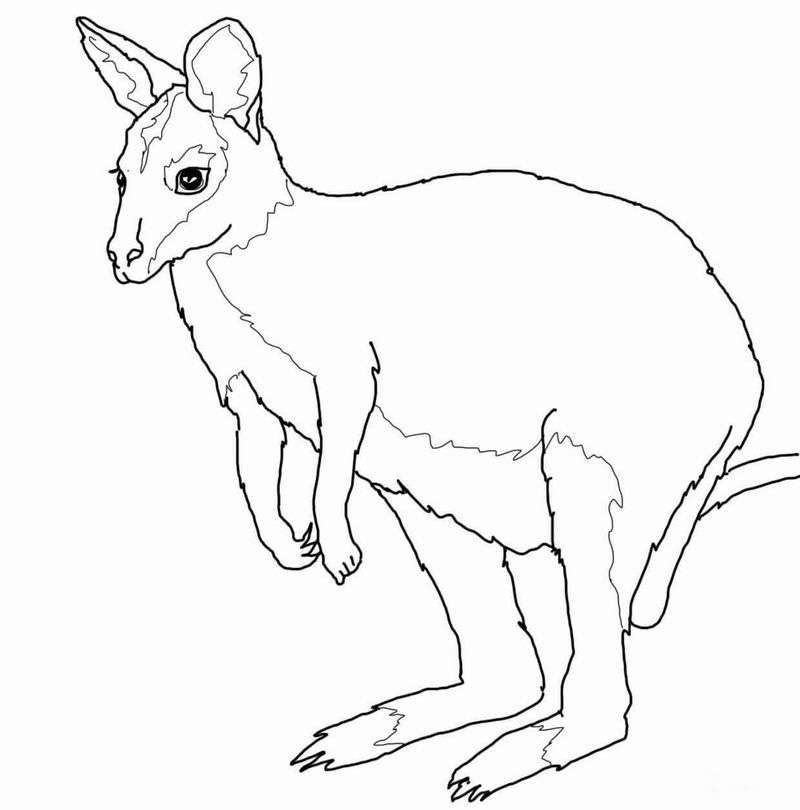 Wallaby coloring page