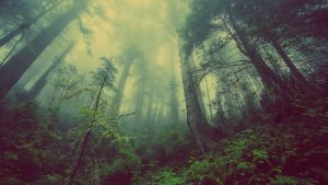 Fog and forest wallpaper
