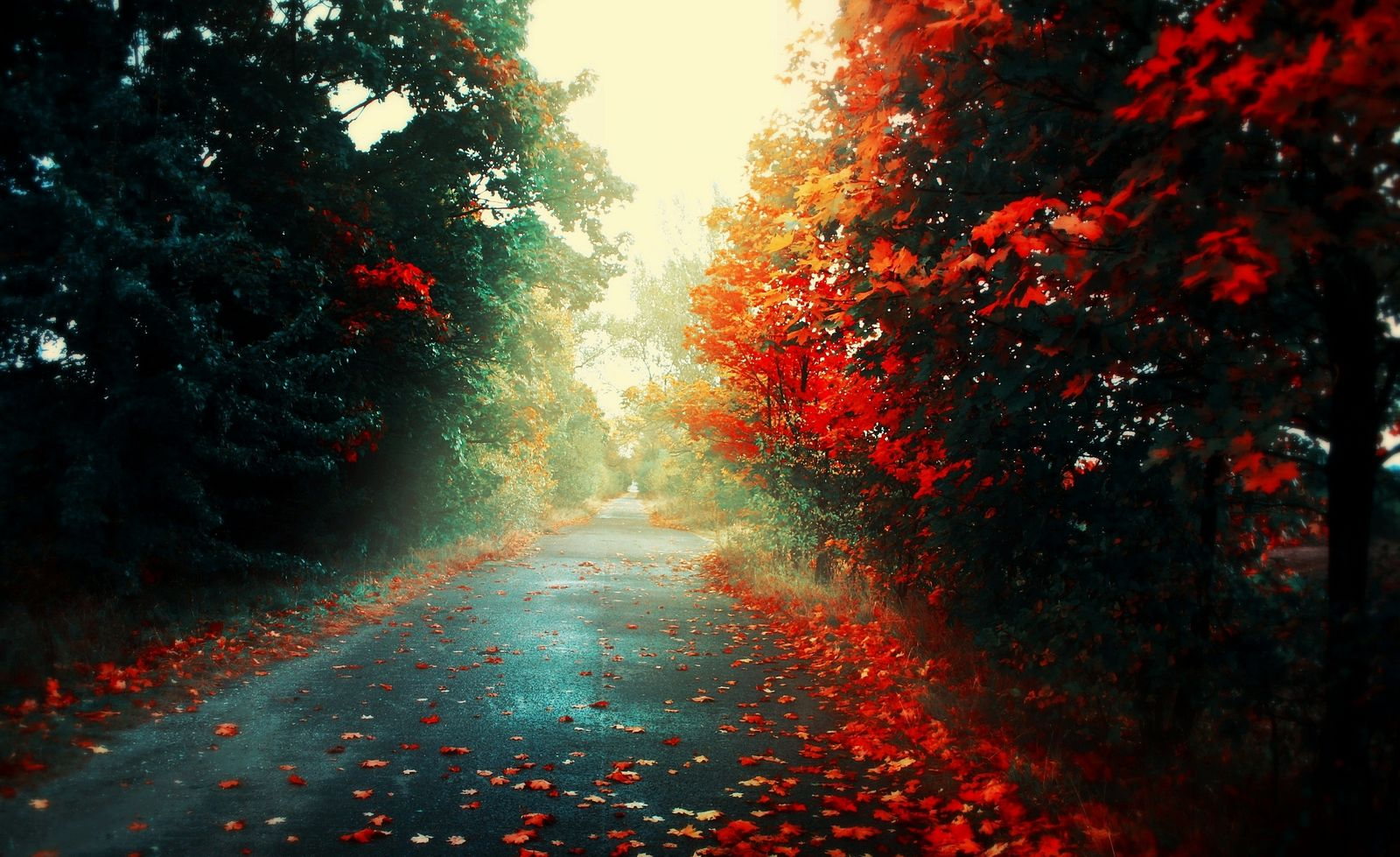 Red leaves wallpapers