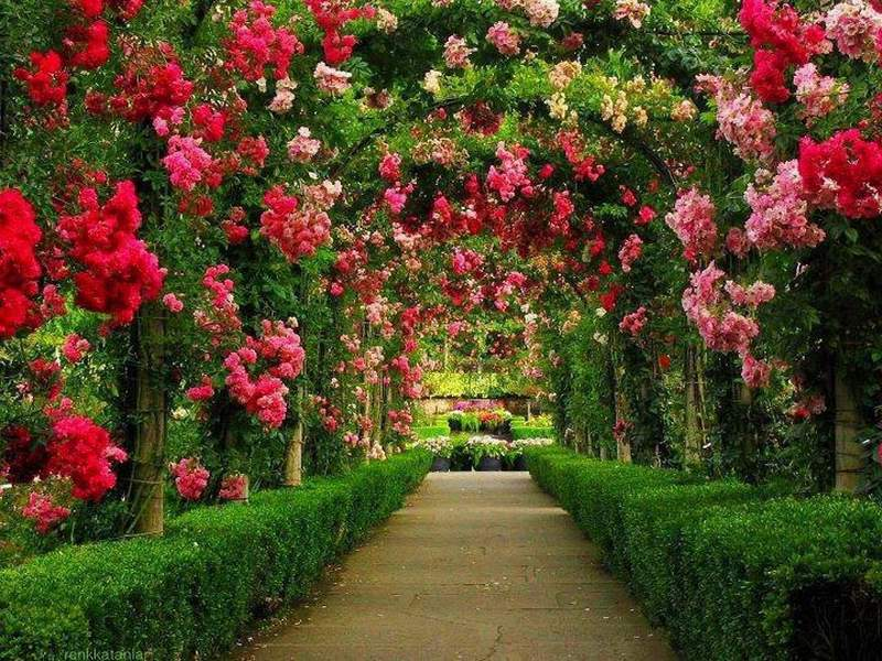 55 Most Beautiful Flowers Free Wallpepers