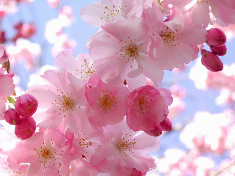 lovely flower wallpapers 2
