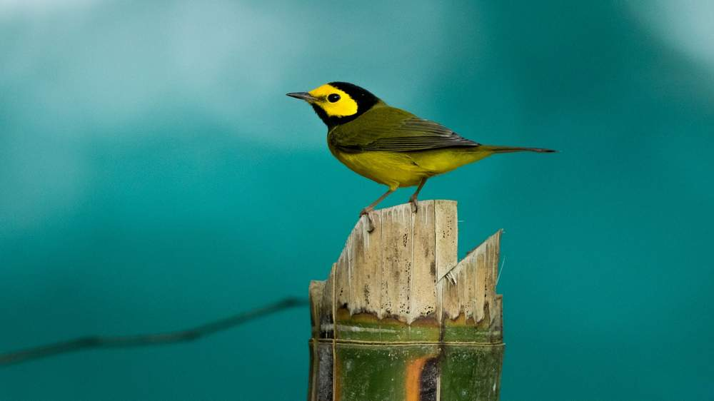 Beautiful Birs in Nature HD Wallpapers