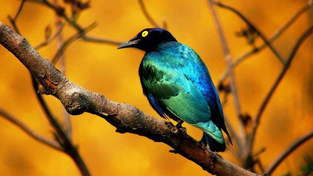 Birds backgrounds free download