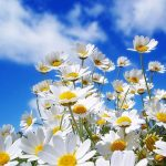 The Most Beautiful Spring Wallpapers And Pictures
